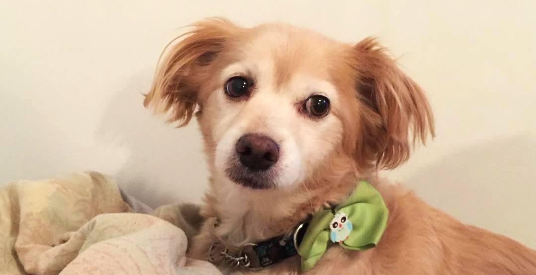 Jazz the dog in happier times (jazz_the_dawg/Instagram)