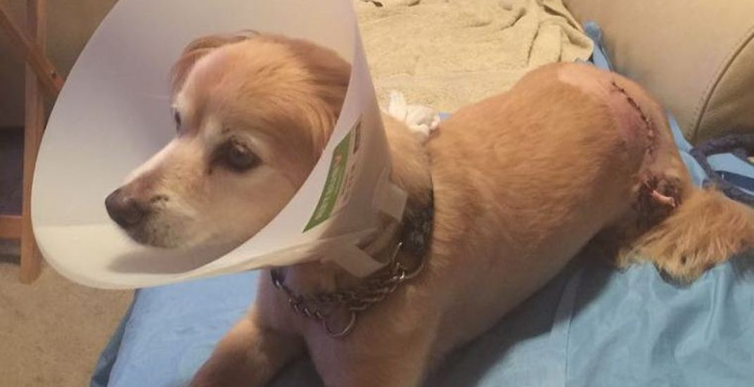 Alleged off-leash dog attack in Coquitlam prompts appeal