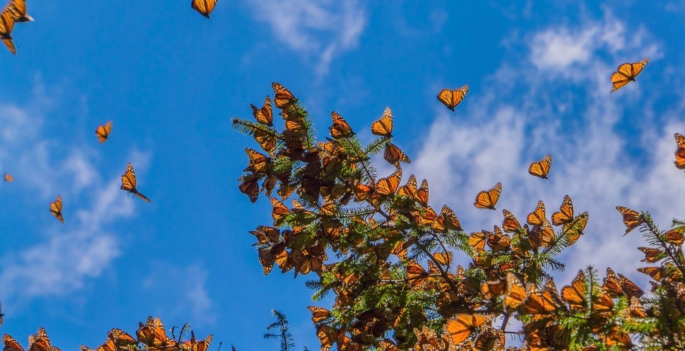 There's a butterfly festival happening in Toronto this weekend