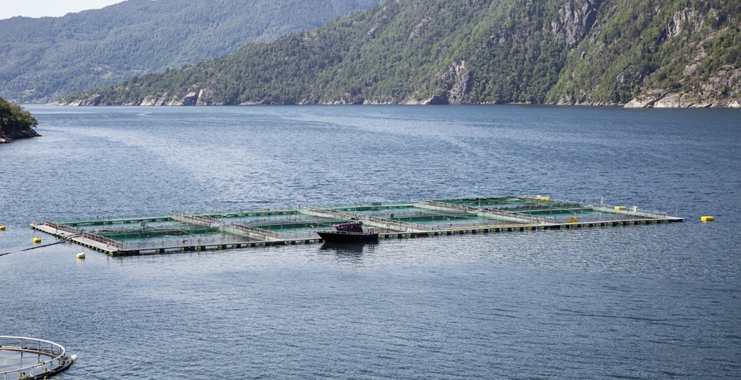 What British Columbians can do in the aftermath of the Atlantic salmon farm spill