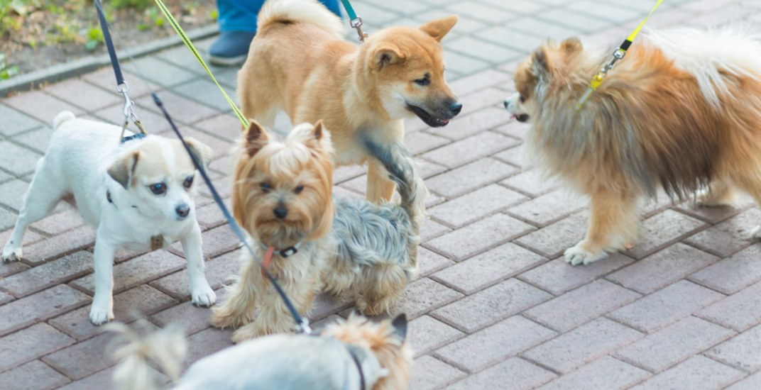 Pet-A-Palooza brings pooches together in Vancouver this weekend