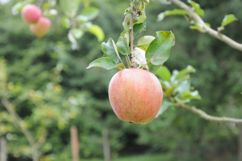 Heritage Apple Day