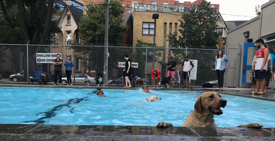 Toronto dogs make a splash at public pools over the weekend (PHOTOS)
