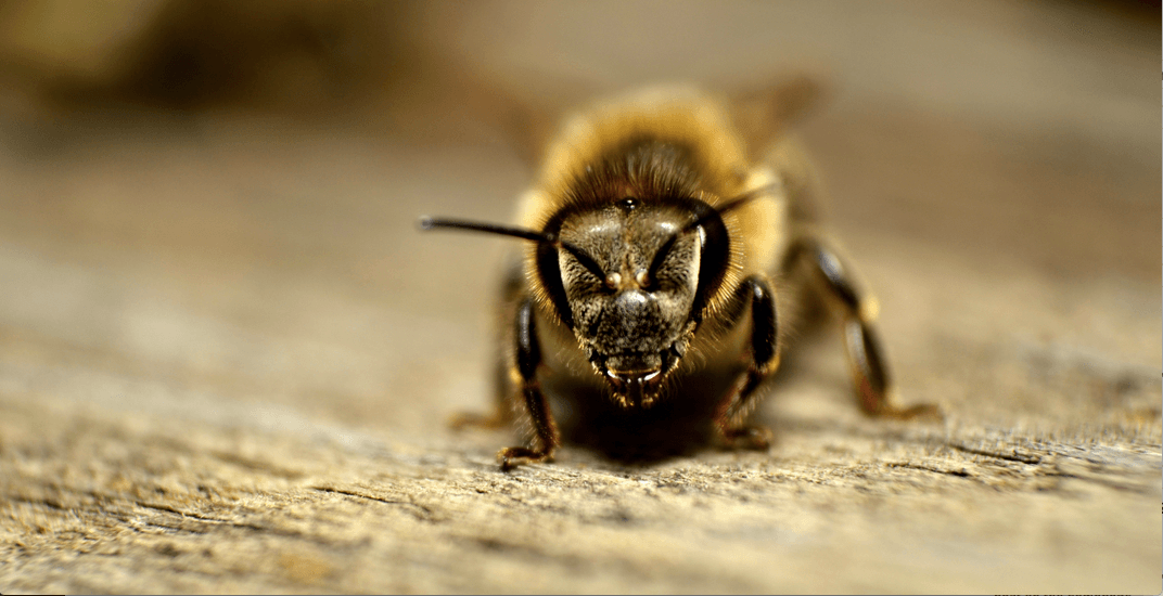 North Vancouver woman stung with traffic ticket after bee causes crash