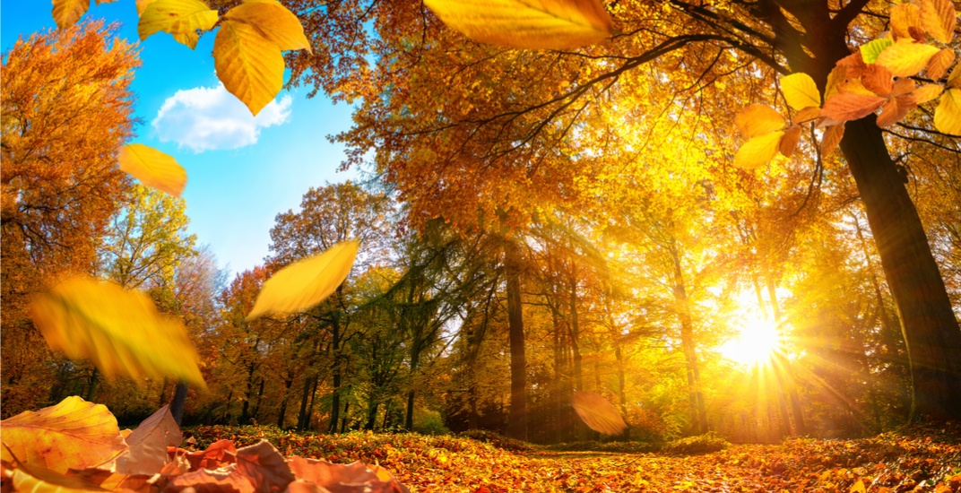 The Weather Network has released Canada's fall weather forecast