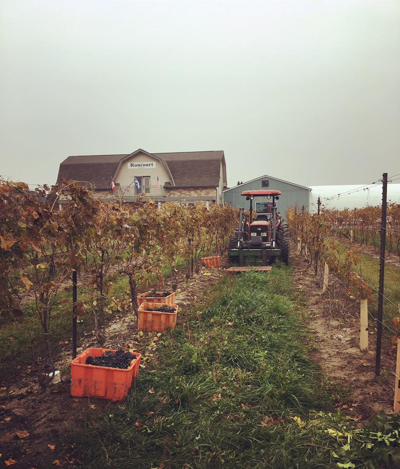 Rancourt Winery haunted harvest