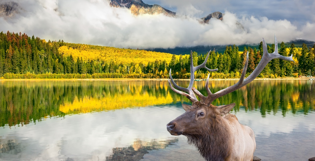 Report: Half of Canada's wildlife populations are rapidly declining
