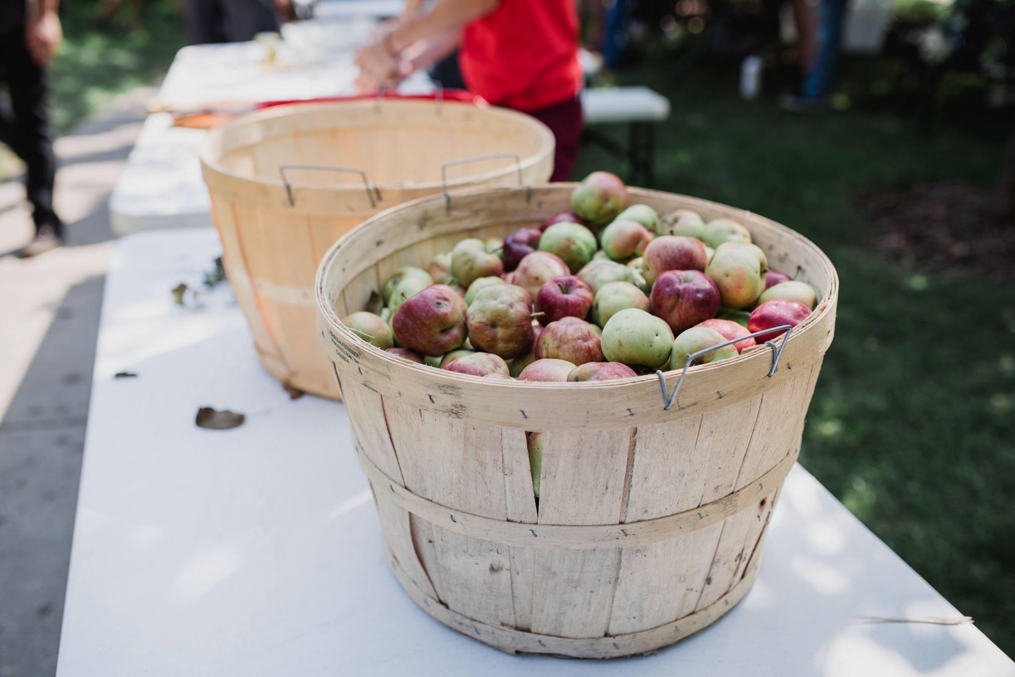 City Cider apples harvest toronto fall