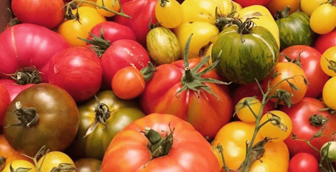 There's a Chef's Harvest Garden Party happening in Toronto this weekend