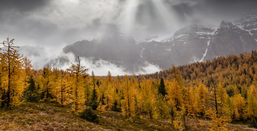Awesome Alberta: Larch Valley is a must hike (PHOTOS)