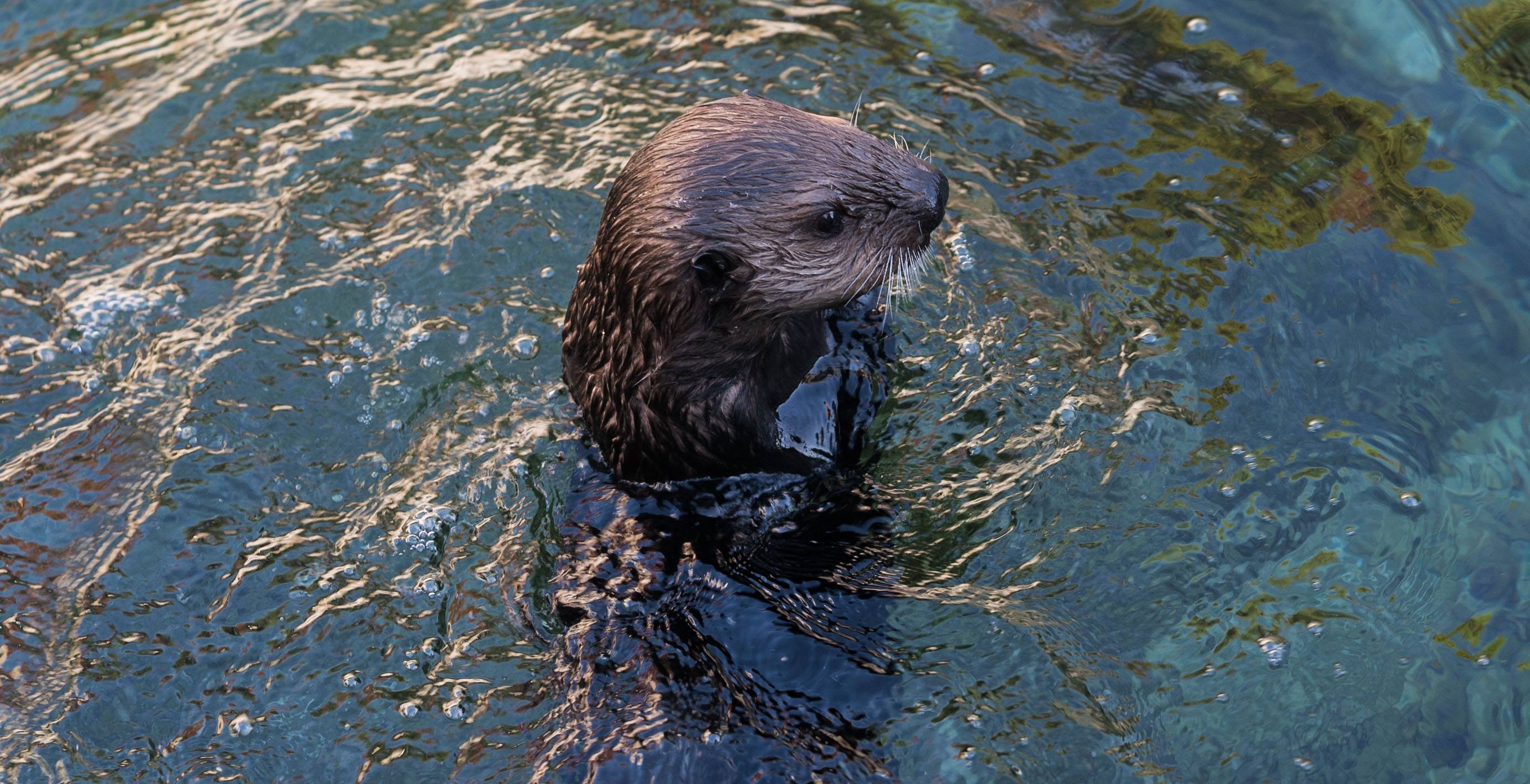 Hardy sees Tanu for the first time (Vancouver Aquarium)