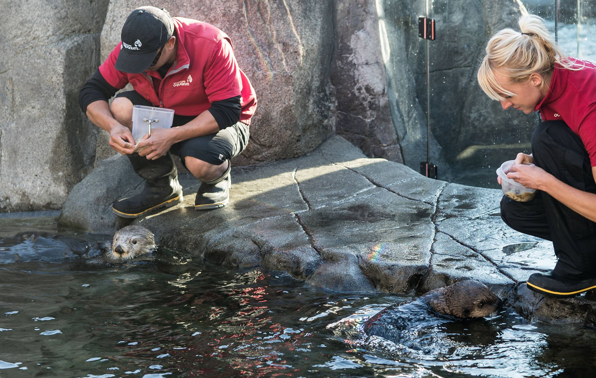 Tanu and Hardy being fed (Vancouver Aquarium)