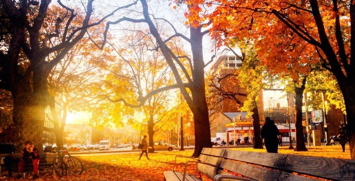 52 Toronto events you need to check out this fall