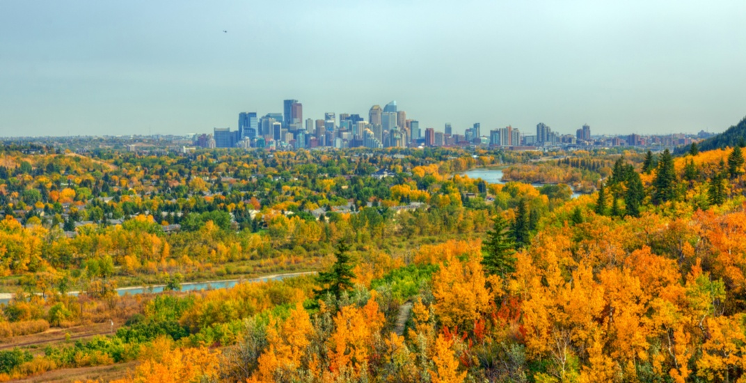 Volunteers to finish planting 750 trees at Calgary parks this weekend