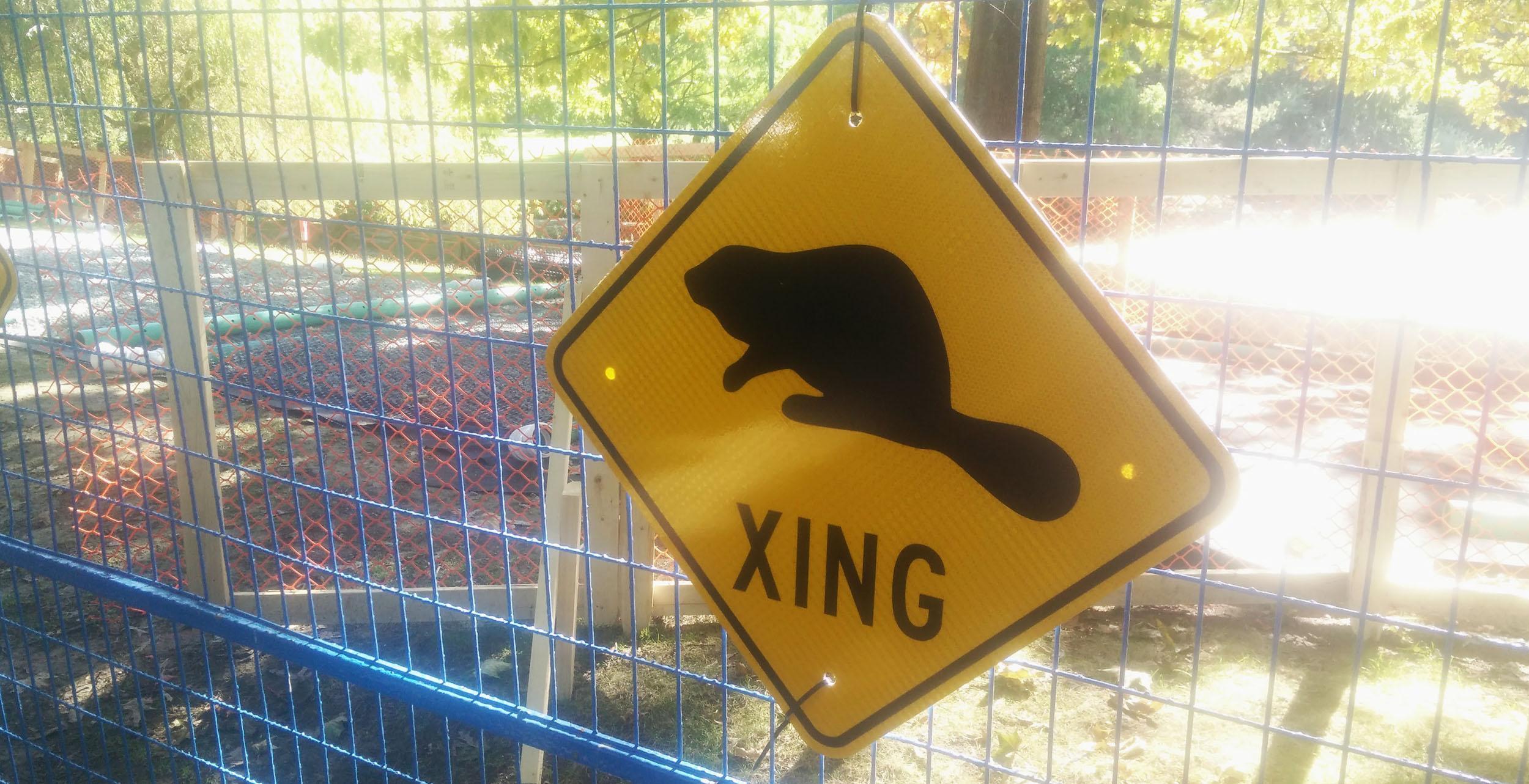 Beaver crossing sign outside Charleson Park (Conrad Olson)