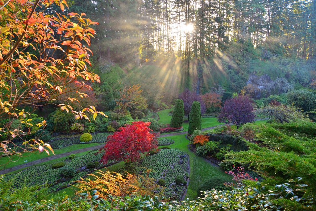 CuratedHeaderSubcategoriesWhere to find autumn foliage in Victoria and Vancouver gardens