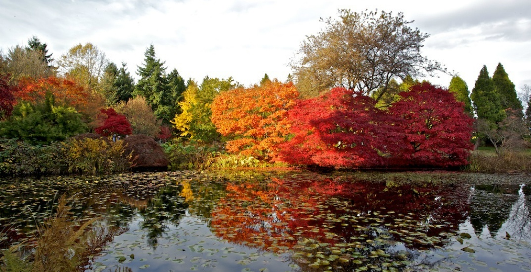 Where to find autumn foliage in Victoria and Vancouver gardens