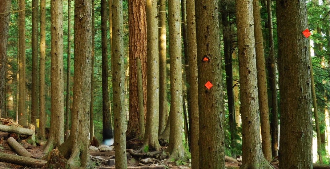 Trail marker theft from local mountains 'frustrating' for North Shore Rescue