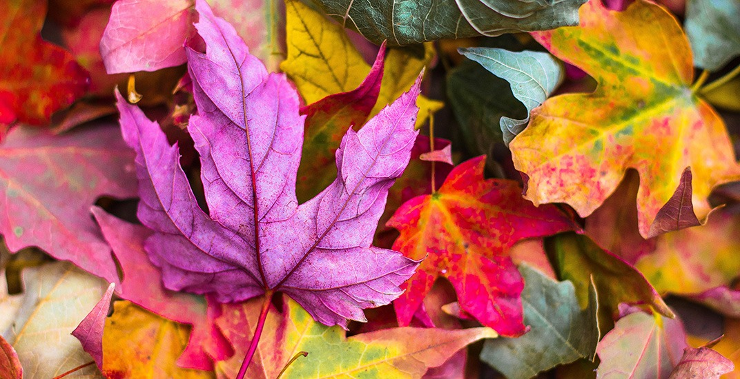 The 8 best places to see the leaves change in Montreal (PHOTOS)