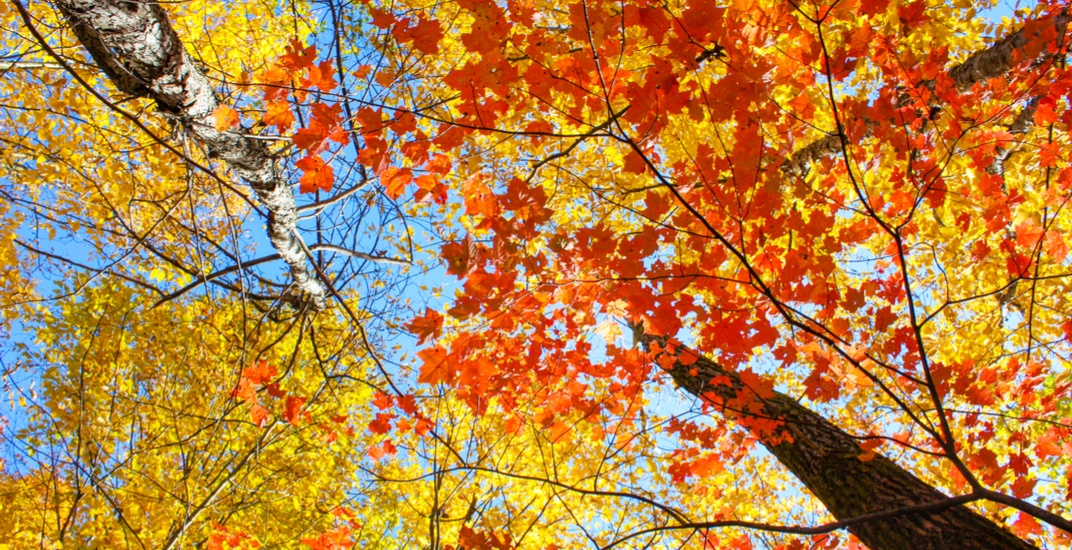 Best places to see fall leaves in Calgary