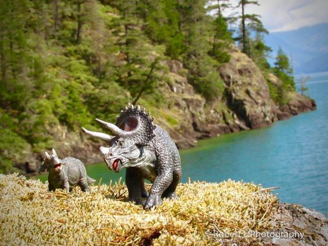 Triceratops take a stroll in BC (Robert L Photography)