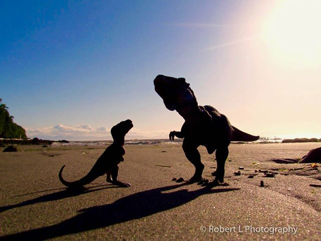 Tyrannosaurus Rex on the beach in Vancouver (Robert L Photography)
