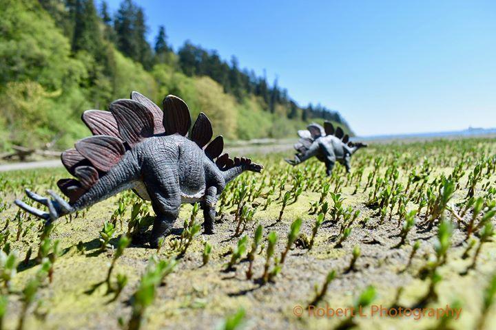 Stegosaurus in Vancouver (Robert L Photography)