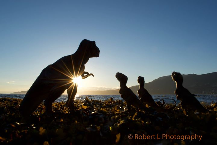 A family of Tyrannosaurus Rex in Vancouver (Robert L Photography)