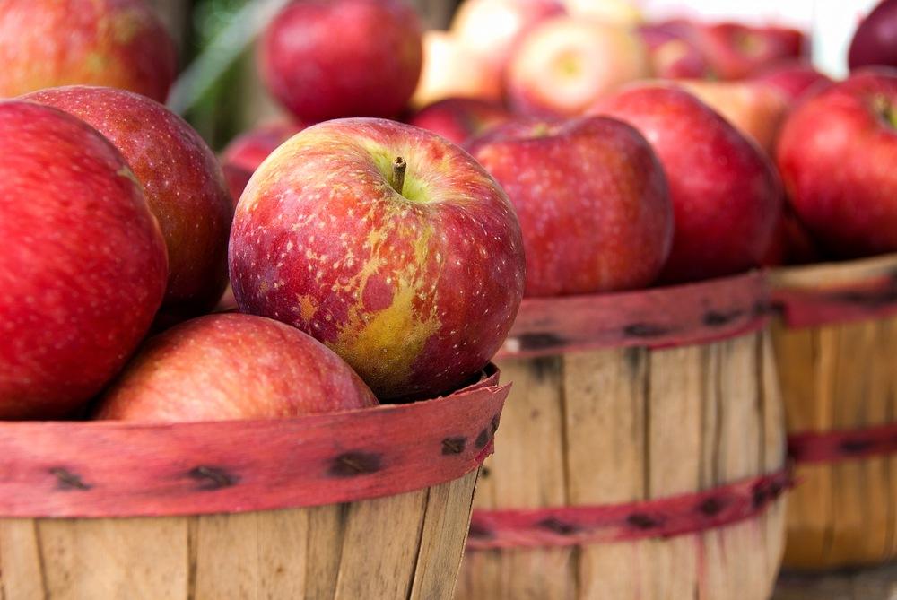 apples apple harvest market
