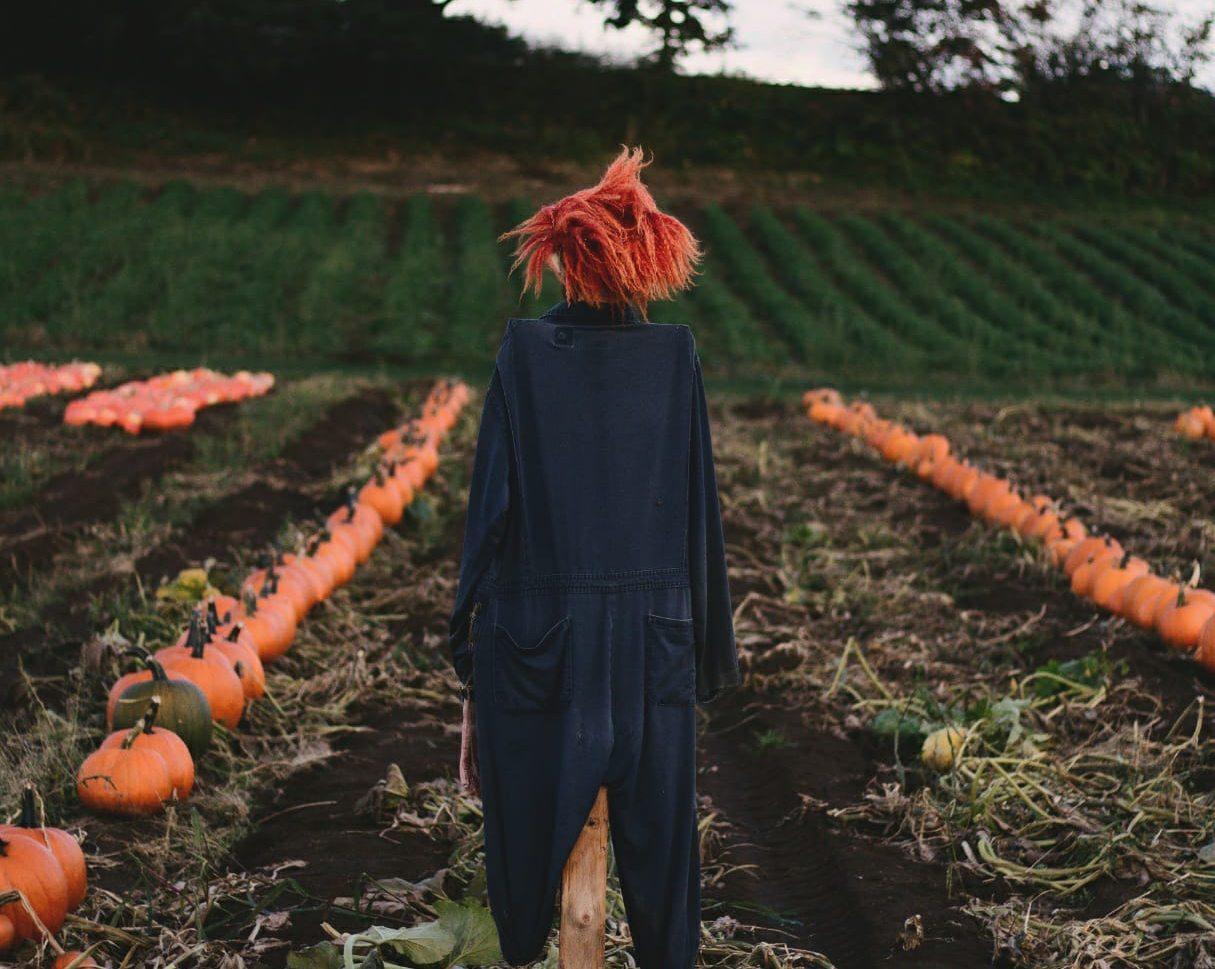 Haunted corn maze scarecrow (Maan Farms/Facebook)