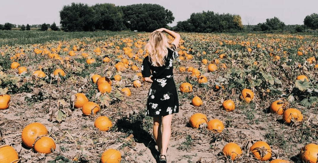 13 pumpkin patches near Toronto you can visit this weekend