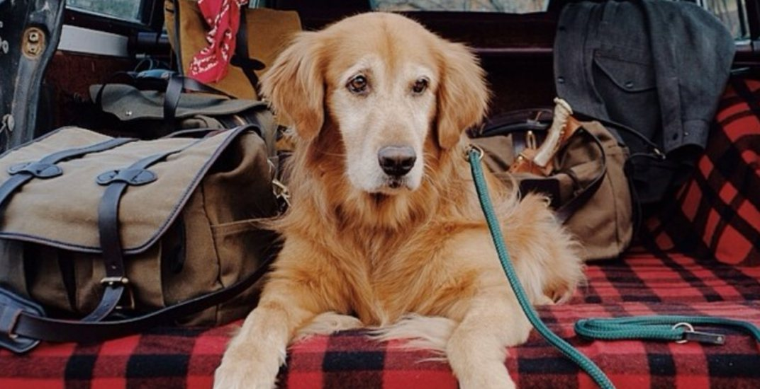 There's a happy hour for your dog taking place in Toronto this month
