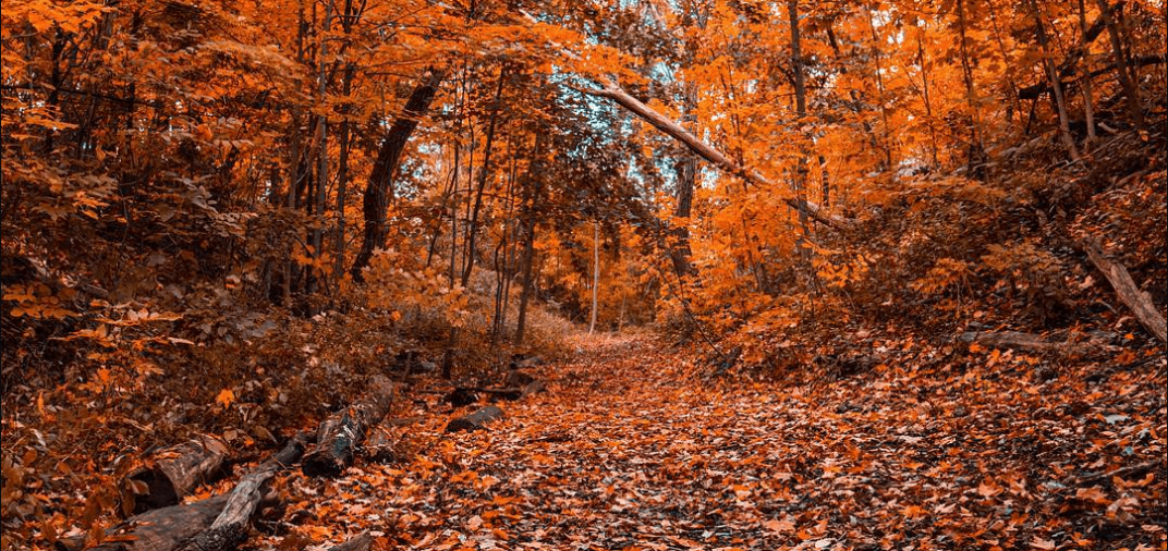 15 places to take the best fall photos in Toronto