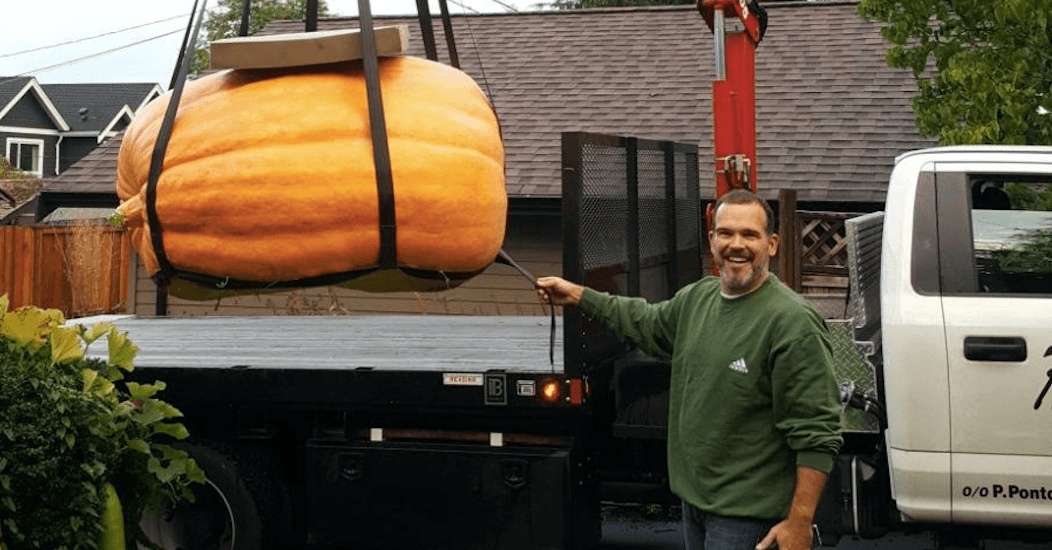 North Vancouver man goes big in garden with giant pumpkin