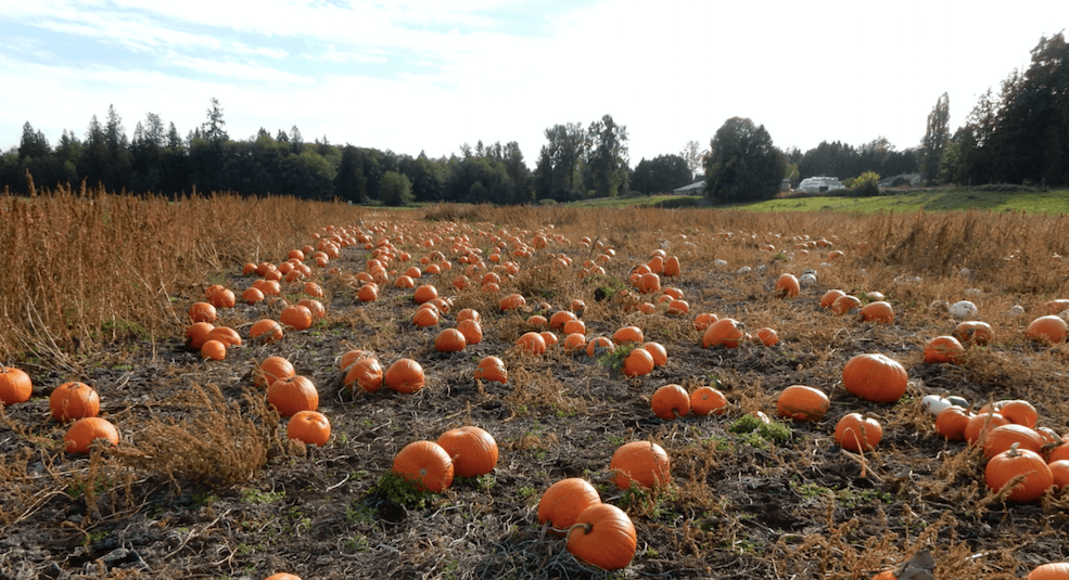 Rondriso Farms Pumpkin Patch