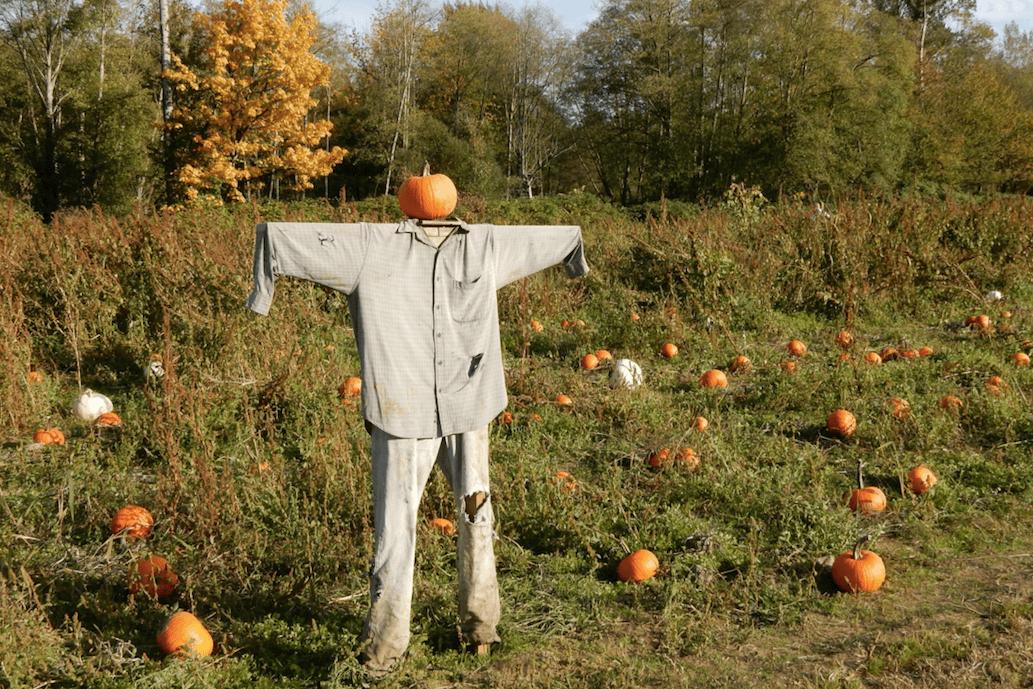 Hazelmere pumpkin patch