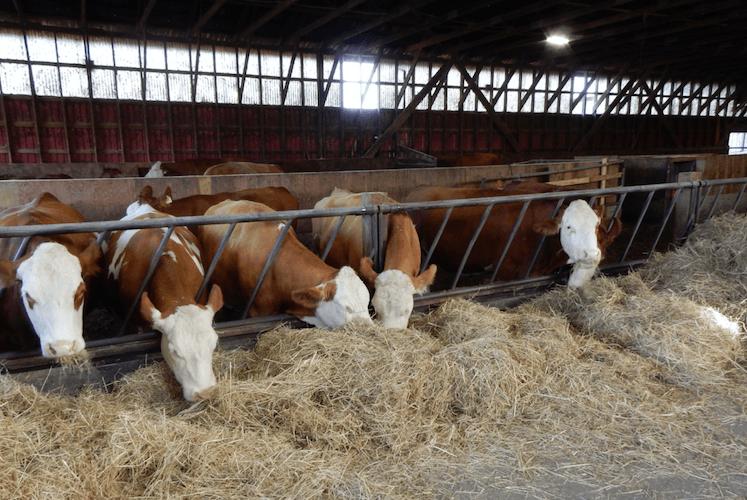 Rondriso Farm