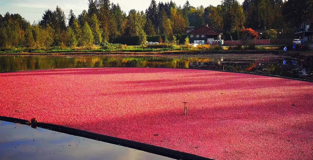 Fort Langley's Cranberry Festival returns this Thanksgiving Weekend