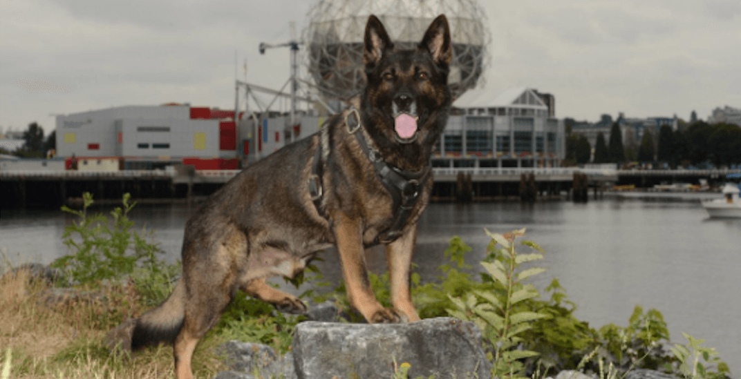 VPD Canine Unit mourns passing of retired four-legged friend