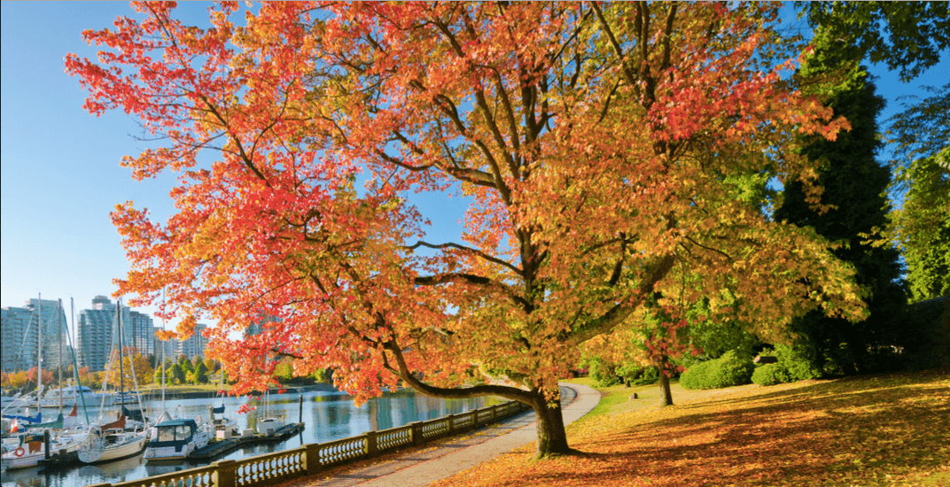 29 beautiful photos that perfectly capture Vancouver's fall colours