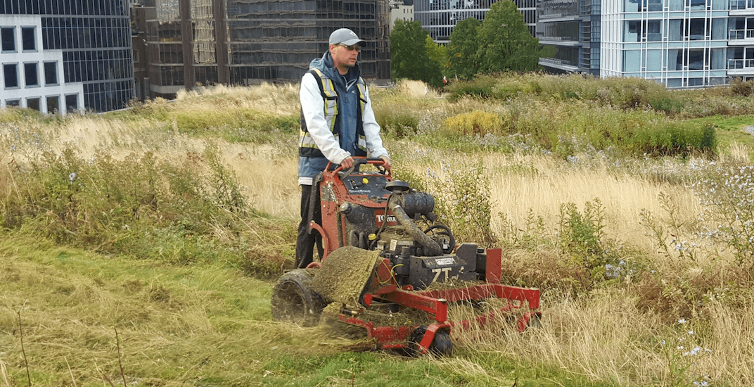 Vancouver's most interesting jobs: What it's like to be a rooftop grass cutter for the Vancouver Convention Centre