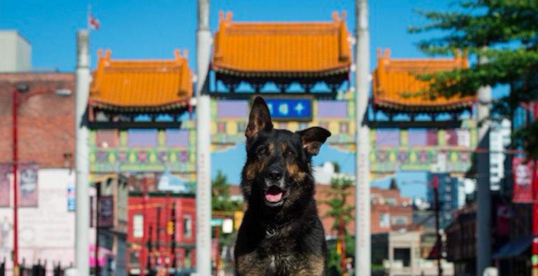 Vancouver Police Dogs Calendar 2018 now on sale
