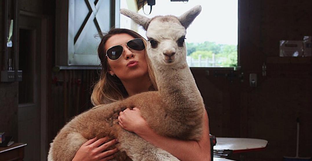 7 farms near Toronto where you can visit adorable alpacas