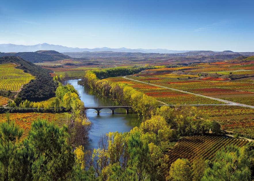 Rioja Wine_Baños-de-Ebro-