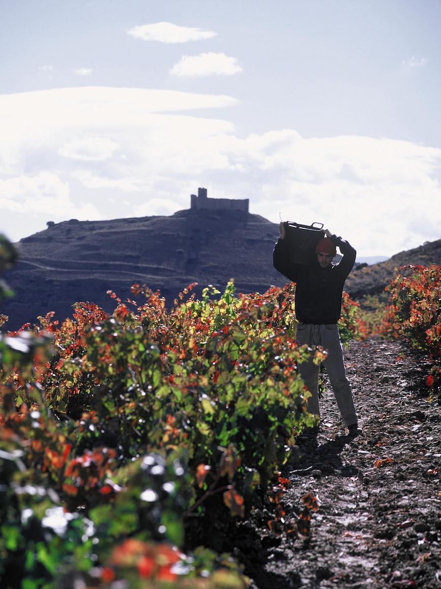 Rioja Wine_