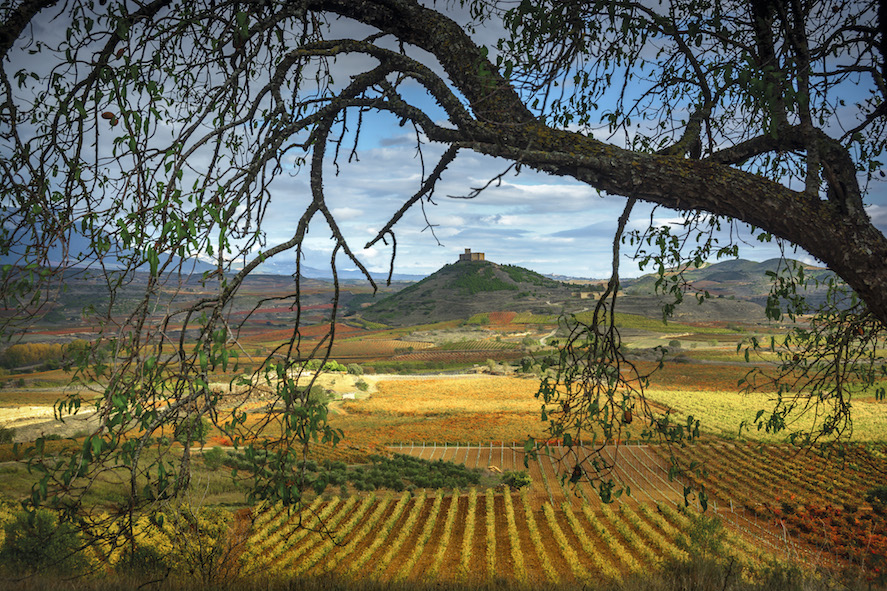 Rioja Wine_San-Vicente-090