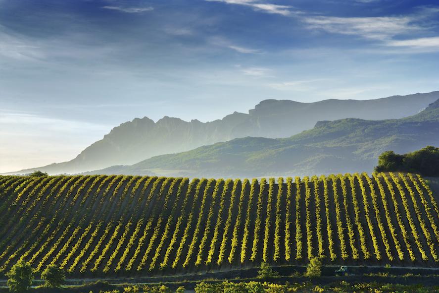 Rioja Wine_Sierra-Cantabria_075