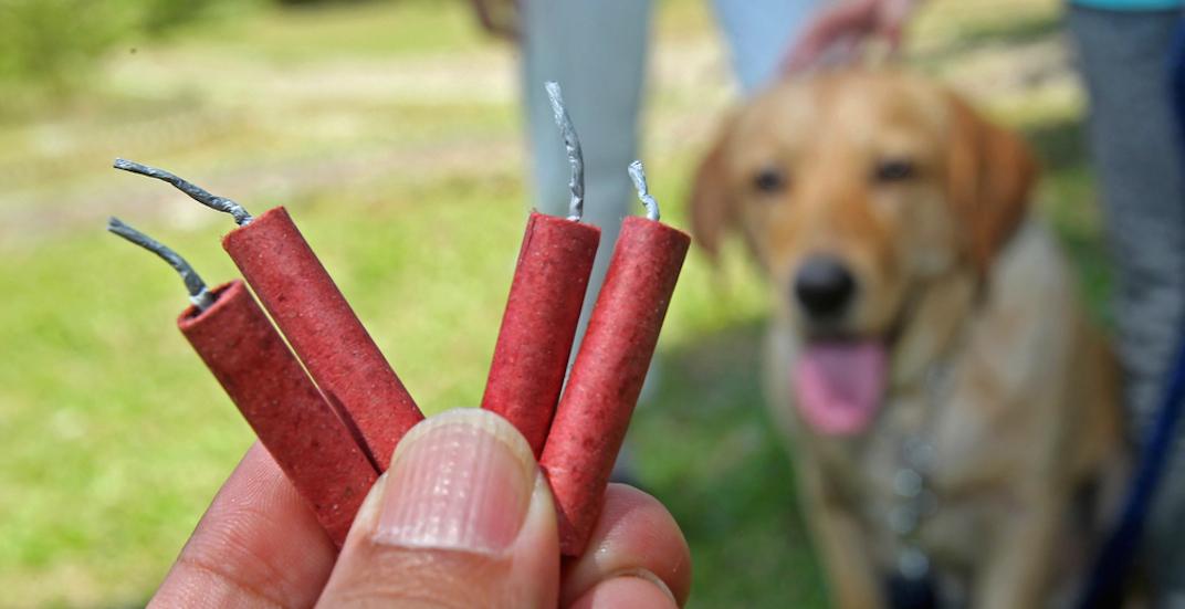 Pet safety dog fireworks firecrackers