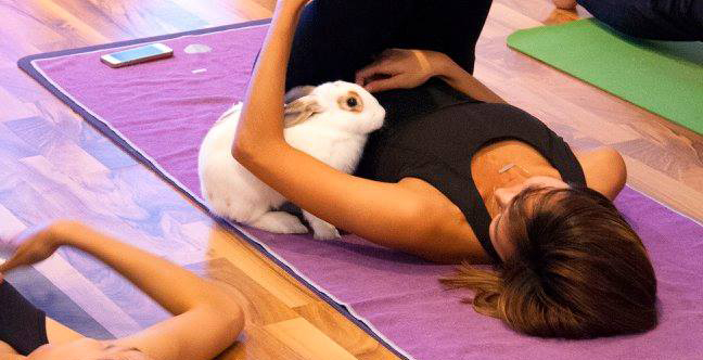 Breathe deeply with bunnies during this yoga event at SFU