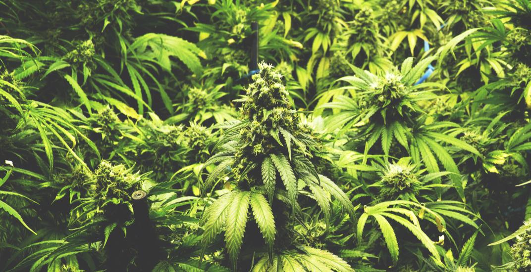 Richmond City Council unanimously votes against marijuana legalization